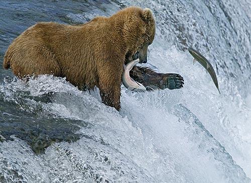 fishing by philwig