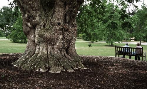 kew tree by bryan27