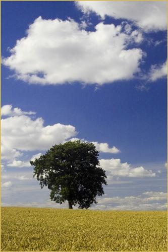 Lone Tree by Kim Walton