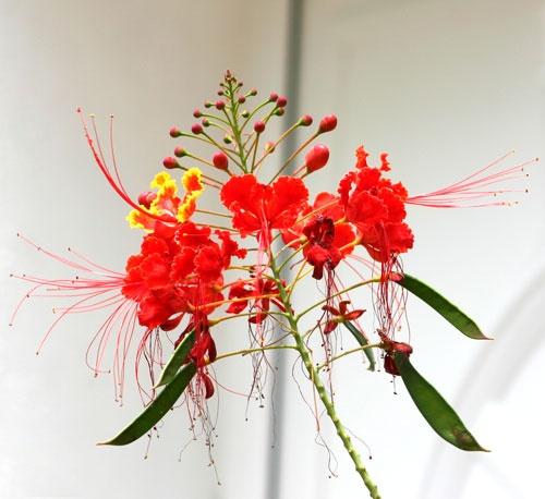 flowers by rf