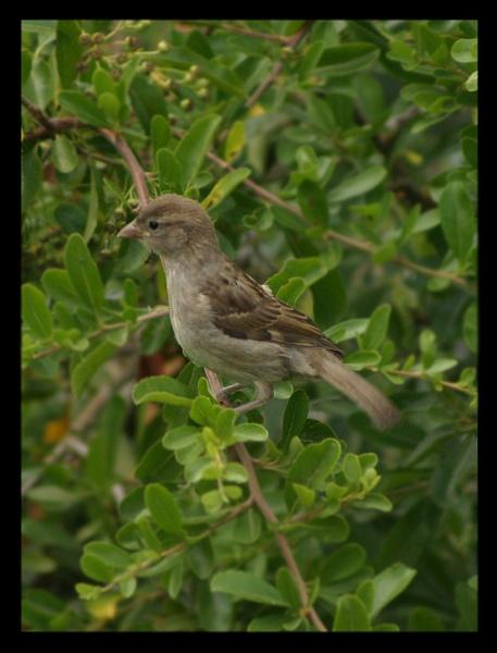 Bird in the bush by dwjones