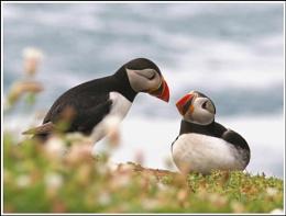 More Lovebirds