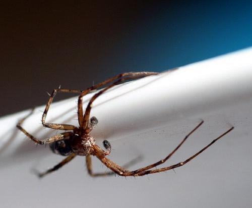Spider by v_equals