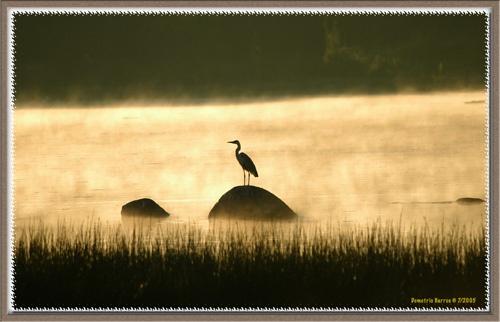 Heron Watching Sunset by demetrio