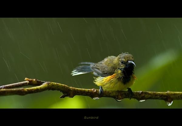 Bird Bath by suleesia