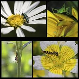 Bugs Life