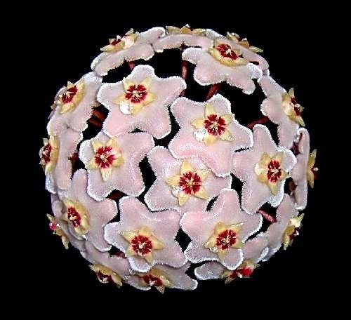 Flower Ball !! by AngelaB