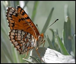 Nymphalidae Somethingorother