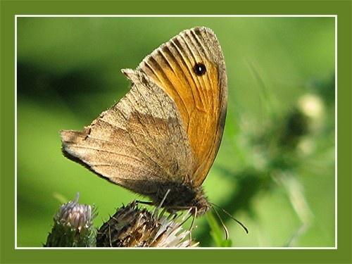 Flutterby by KBan