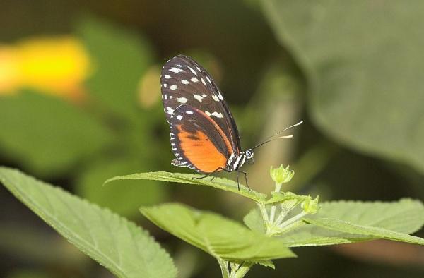 butterfly by OLDNIK
