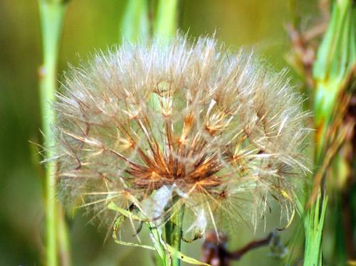 Rye plant life by Della_W