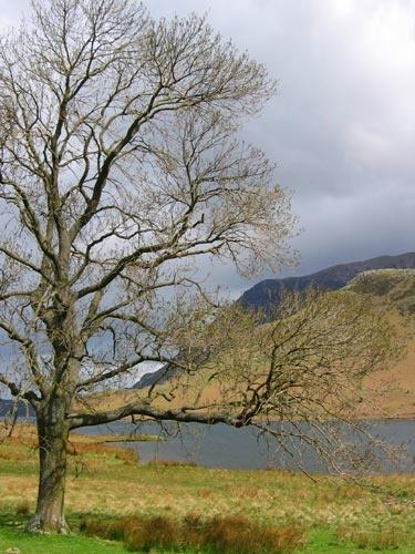It\'s a tree by RipleyExile