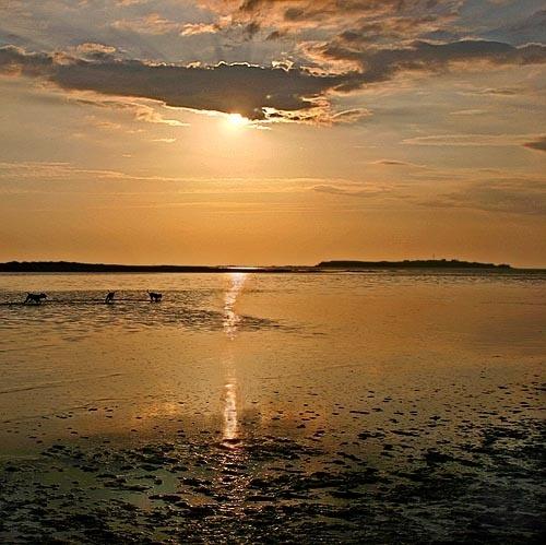 Hilbre Sunset by ericfaragh