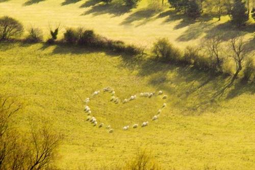 I Love my sheep xxxxx by Kim Walton