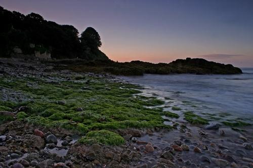 seaweed by happysnapper