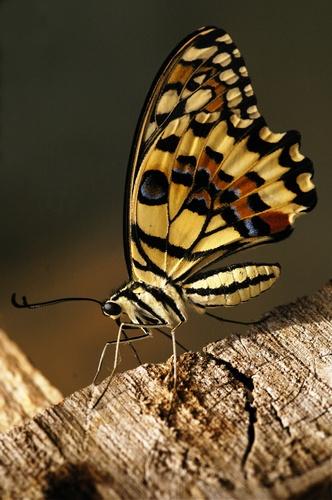 Butterfly 1:) by deavilin
