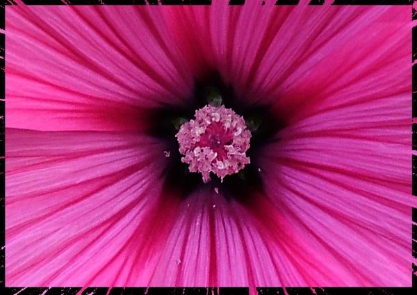 Blowin Pollen by hurstwood