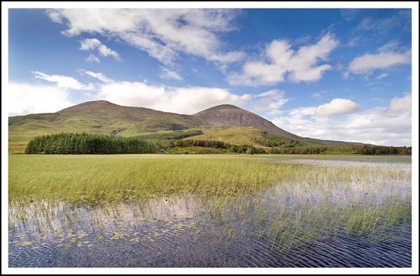 Reeds by Scottishlandscapes