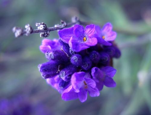 Purple by netti spaghetti