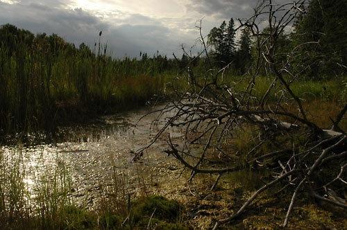 Fallen Tree 2 by TrevorB