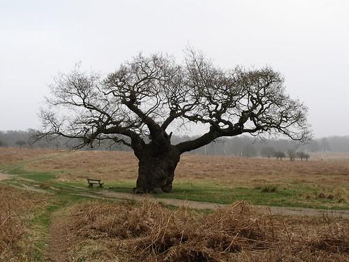 Tree by digitalirony