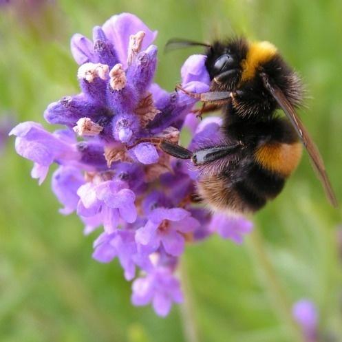 Bee Happy! by silverwolf