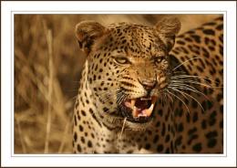 Wild In Africa 2