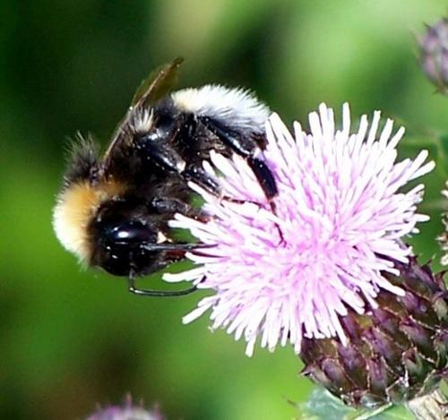Bee by bono