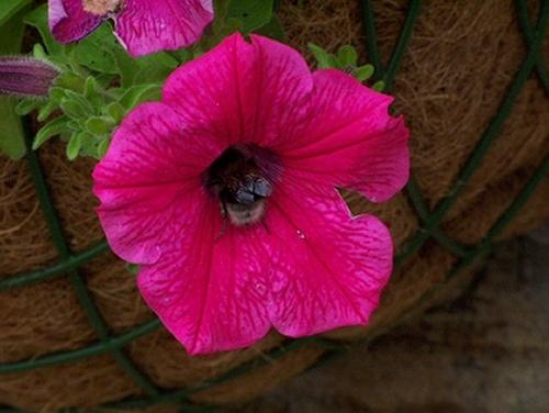 Bumble bee by bono