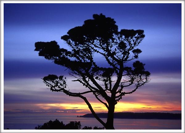 The tree by scottingham