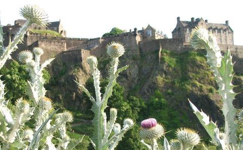 flower of scotland by hibby