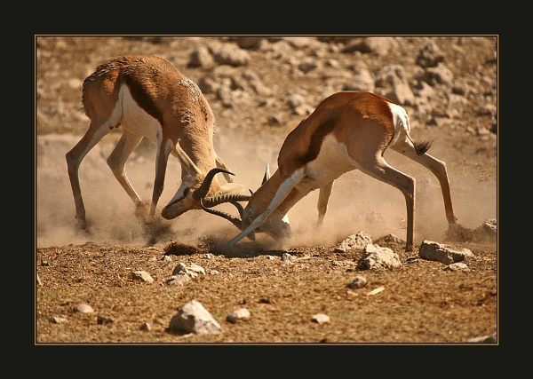 The Fight. by proberts