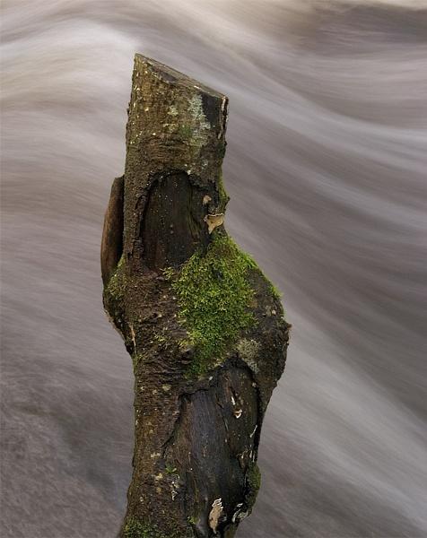 Stump flow by kengreen