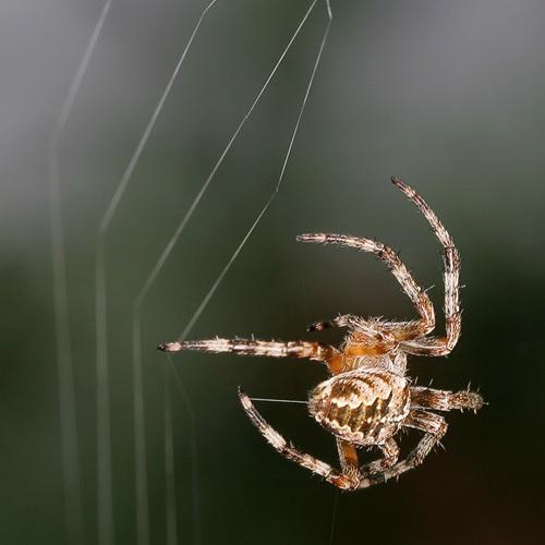 Spinning My Web by gemm