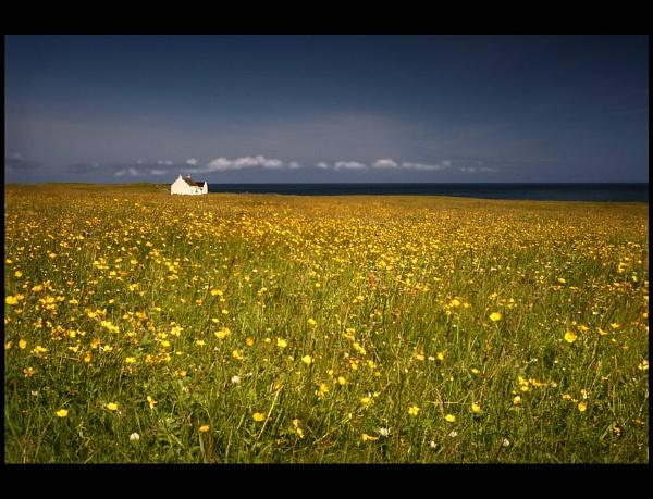 Buttercups by simon butterworth