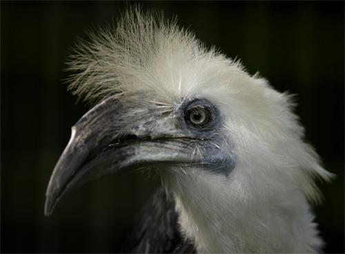 hornbill by john4