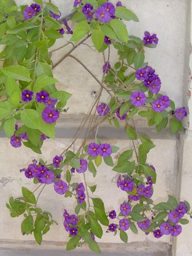 Little purples.. by fionaw