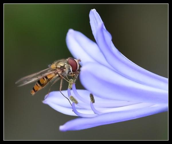 Landed Fly!! by MartinjD