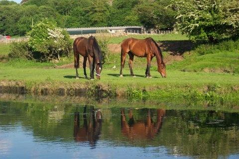 horses grazing by Matthew_Leyshon