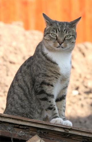 wise old cat by Bogwoppett