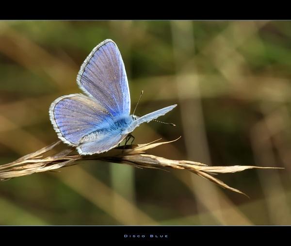 Disco Blue by celestun