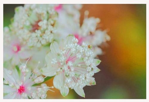A delicate blur by S_Ten