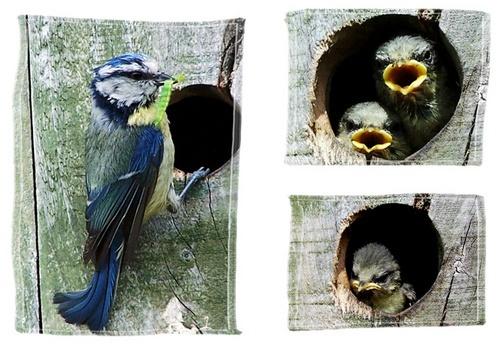 Blue Tits by eddieali1961
