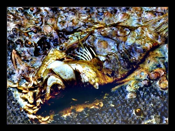Dead Fish by eskimo