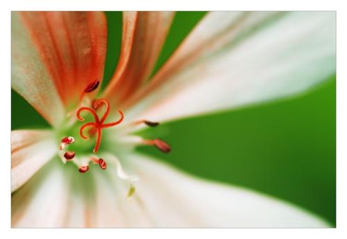 Flower by smarjoram