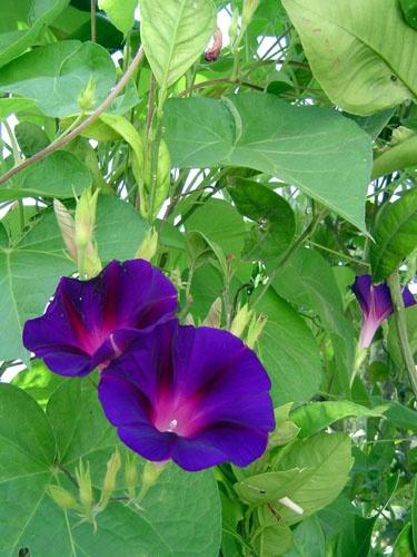 purple.. by fionaw
