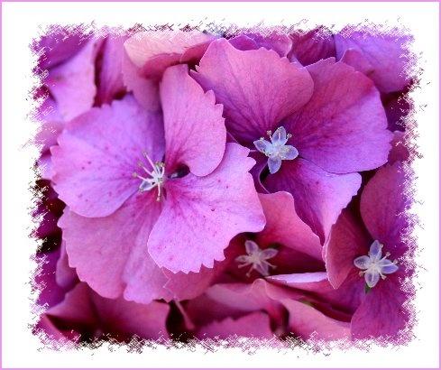 Inner Flowers by AngelaB