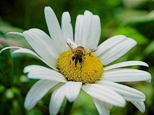 Honey Bee by GregorP