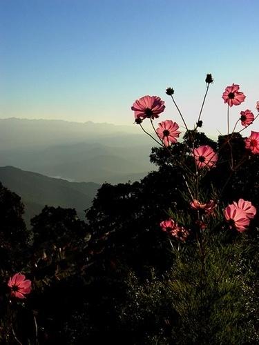 himalayan blooms by Kali