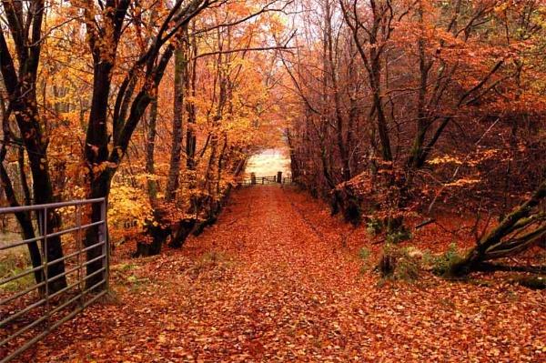 Leafy Lane by stulam